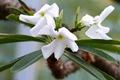LI-flowers-0354b
